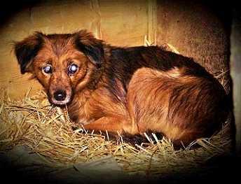 Loesje (Lusia) ong 10 jaar, woont in Zeewolde (blind)