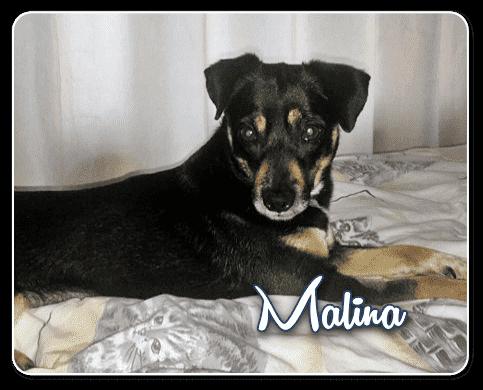 Vagabond Pets Malina foto 1