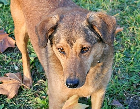 vagabond-pets-adoptie-pixel-hero-2