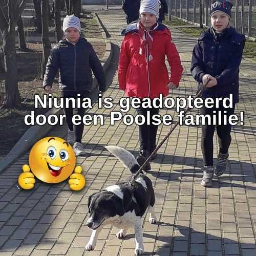 Niunia geadopteerd