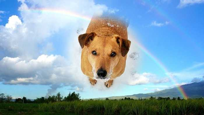 Frits rainbowbridge